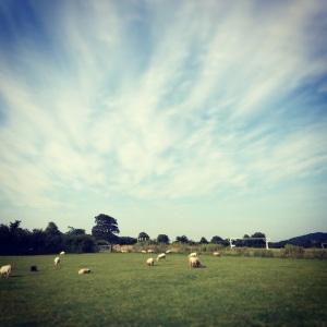 Bridgend Sheep