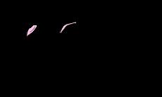 CatrabbitMediaTransparent